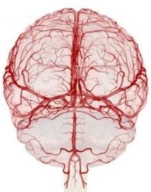 Мозговое кровоснабжение