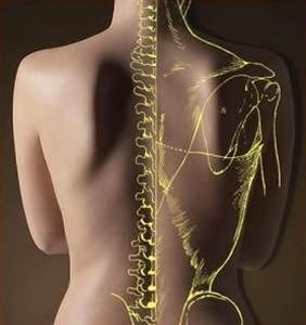Биодинамическая остеопатия