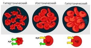 Взаимодействие эритроцитов