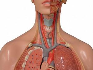 Синдром подключичной артерии