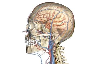 Сосуды шеи и головы