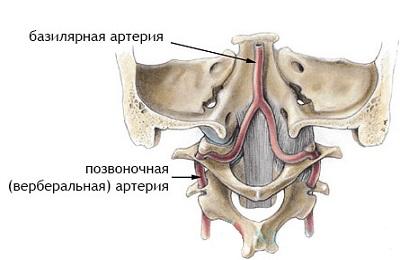 Базилярная артерия