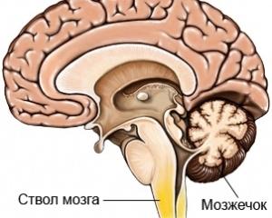 Физиология человека