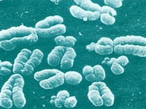 Этиология патогенез атеросклероза