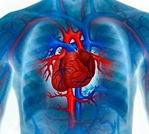 Заболевания сердечно-сосудистой cистемы