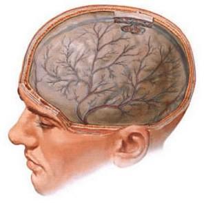 Нарушения кровоснабжения мозга