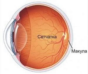 Периферические нарушения глаз
