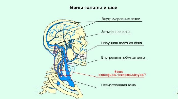 Яремная вена и ее заболевания