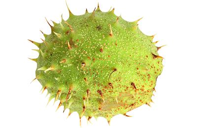 Зеленая кожура