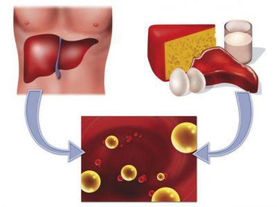 Поступление холестерина